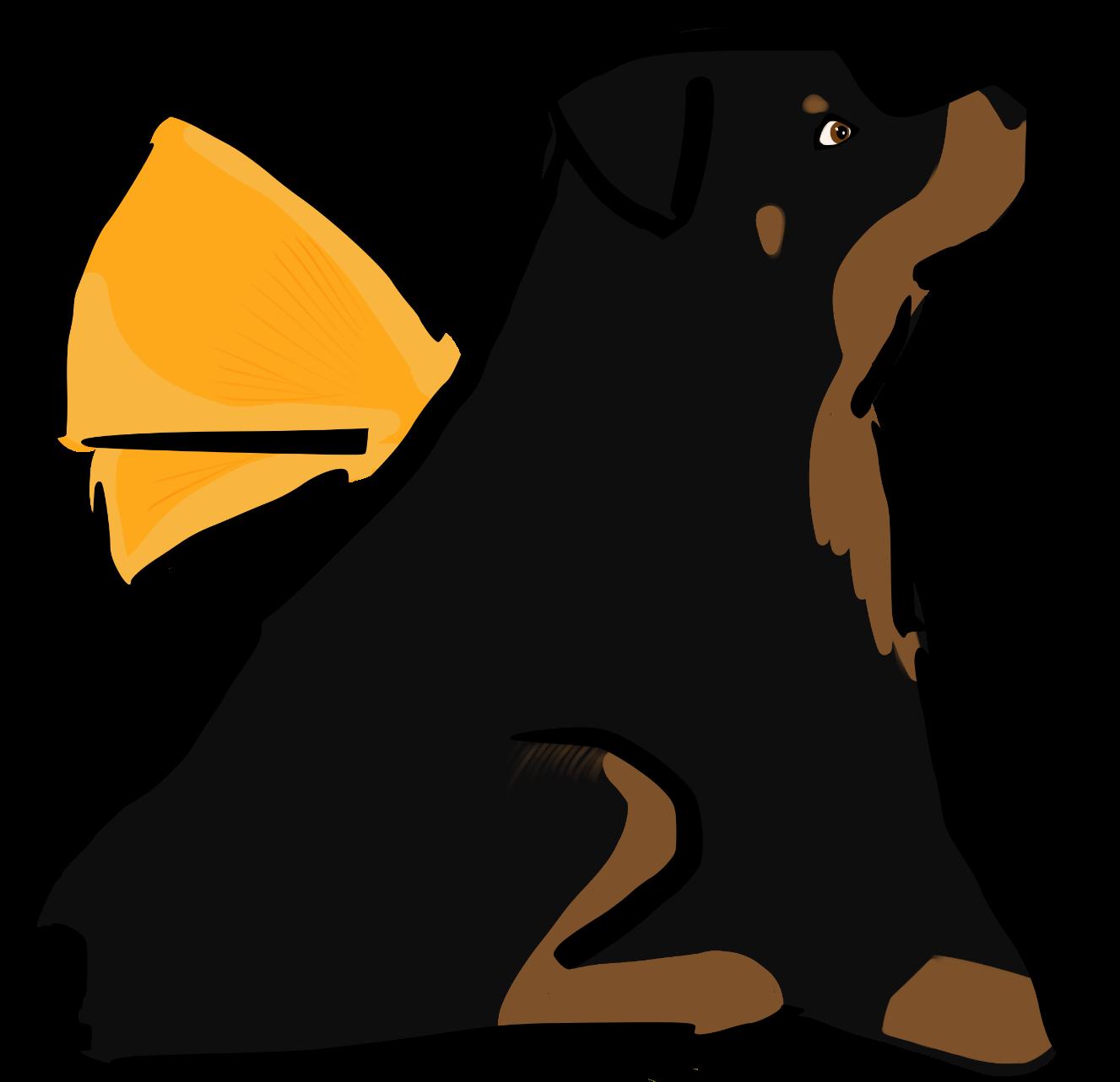 Fundacja Skrzydlaty Pies